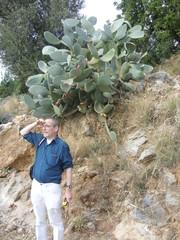 Ausblick mit Kaktus