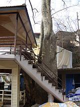 Friseurbaum